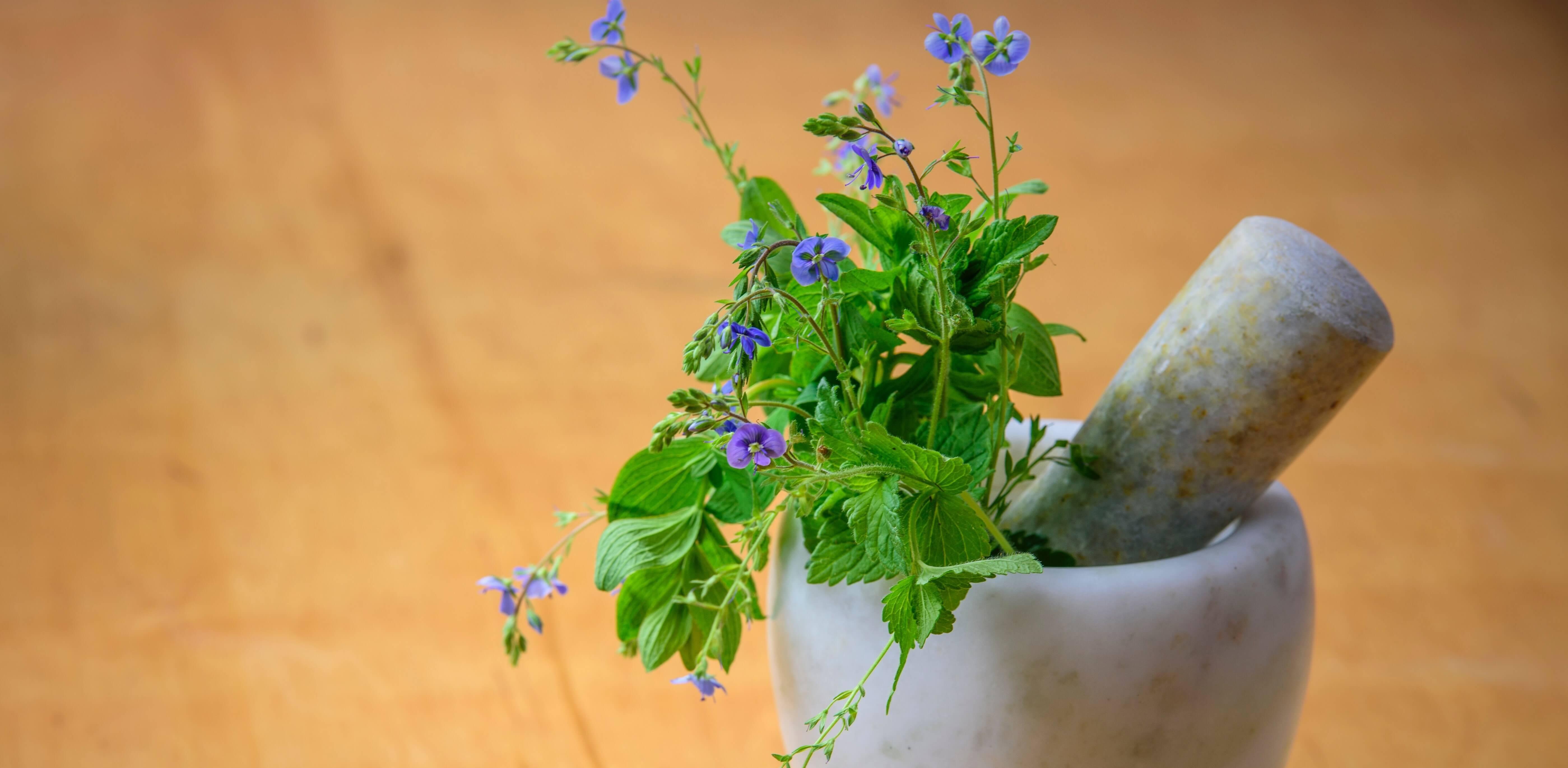 plantes dans un mortier